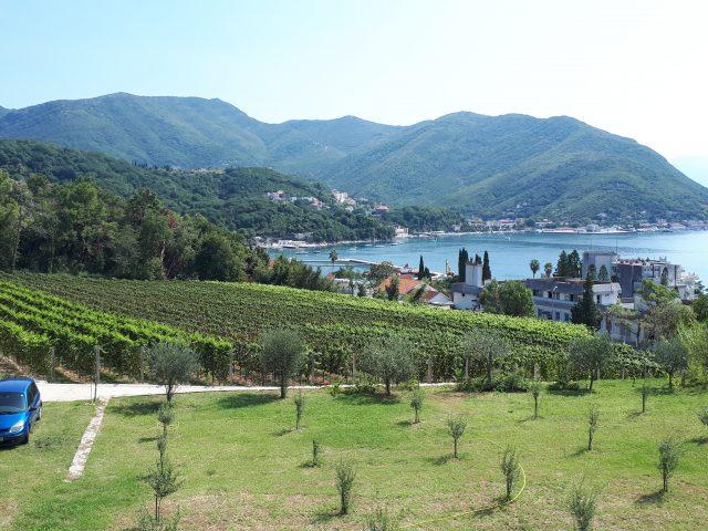 Staze Boke: Vinogradi Boke Kotorske (epizoda 2)