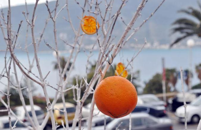 Mala fešta od naranče 26. januara u Njegoševoj