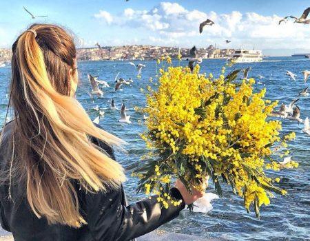 Gdje mimoza raste, vlada carstvo sunca i ljepote