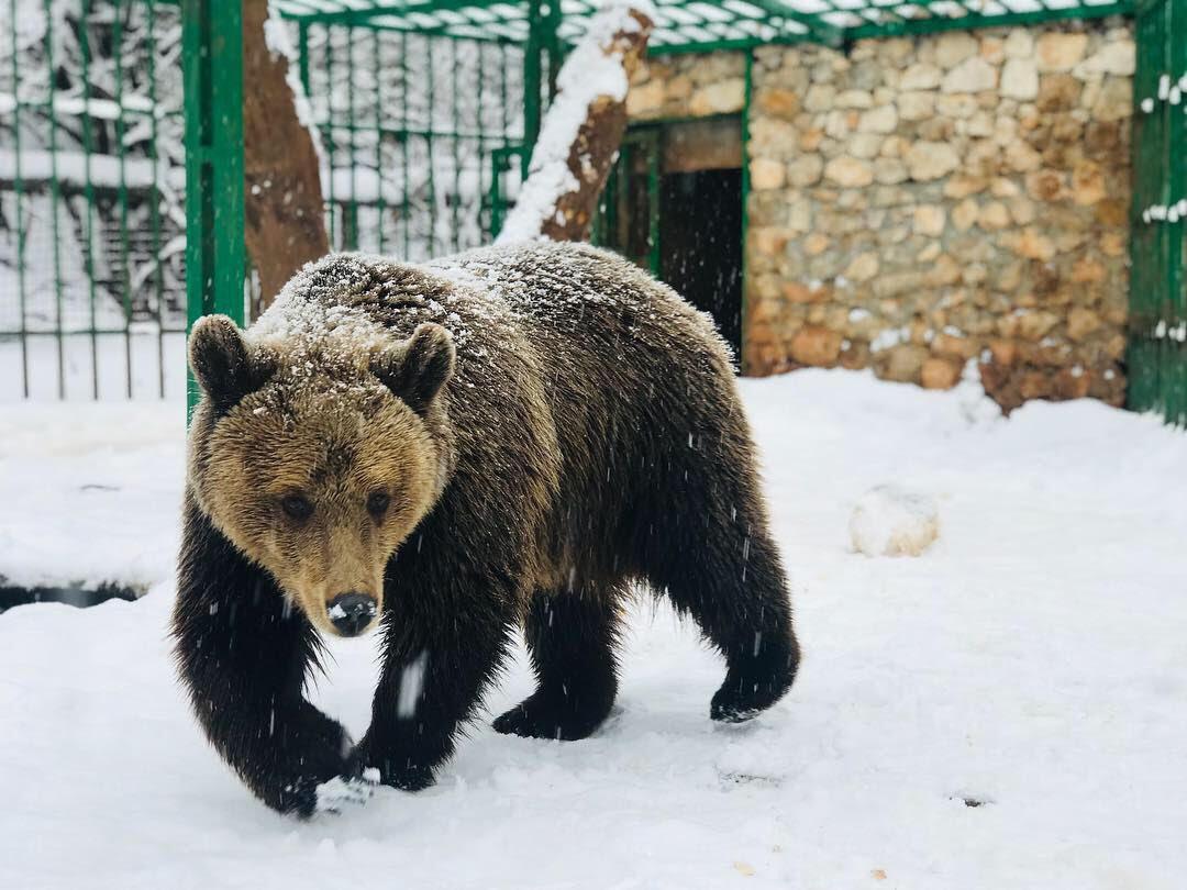 Kad snijeg padne u Prihvatilište najsrećniji je medvjed Ljubo!