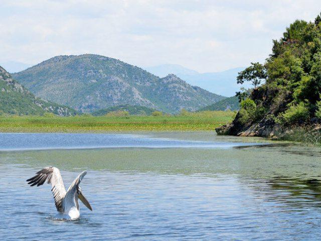 Vidljivi rezultati u očuvanju ribljeg fonda Skadarskog jezera