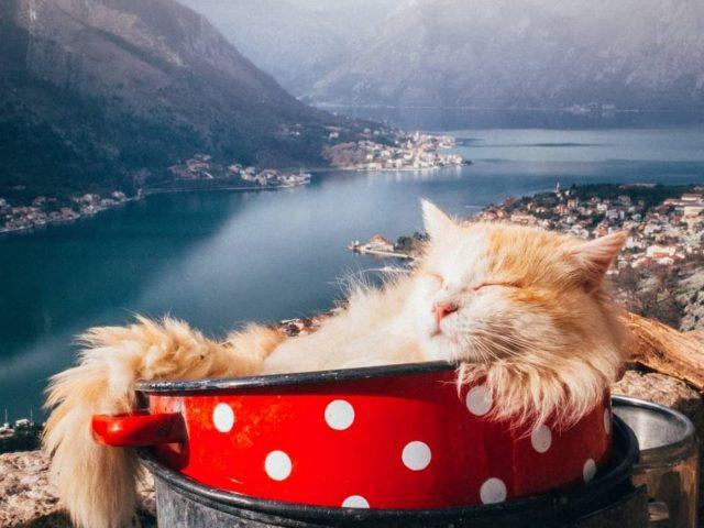Morate ih voljeti: Kako su mačke postale simbol Kotora