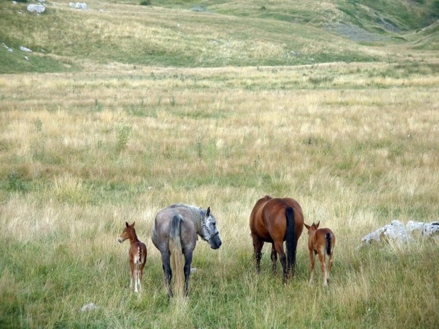 "Crnogorsko blago impresivne ljepote: Park prirode ""Piva"" slavi rođendan!"