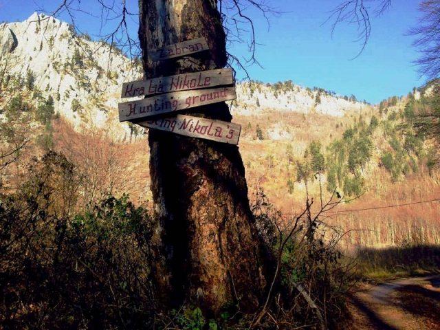 Vodimo vas u kraljevsku šumu: Zabran kralja Nikole