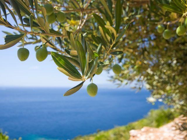 """Ukusi Mediterana: """"Bokeška maslina"""" 19. juna u Tivtu"""