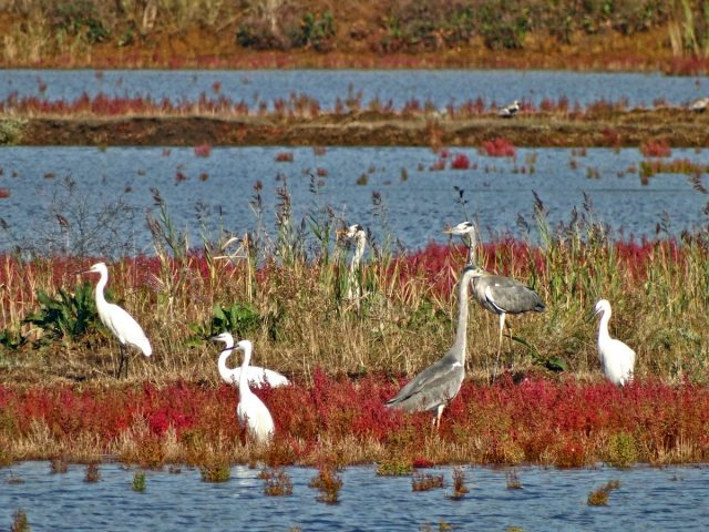 Ulcinjska solana na Ramsar listi močvarnih staništa od svjetskog značaja