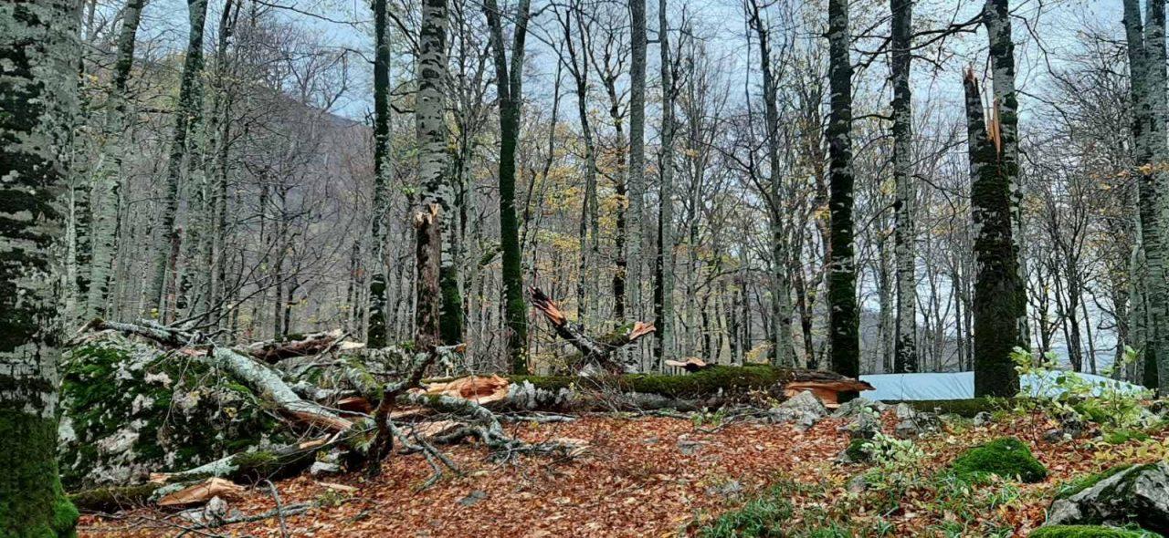 Biogradska gora zatvorena za posjetioce