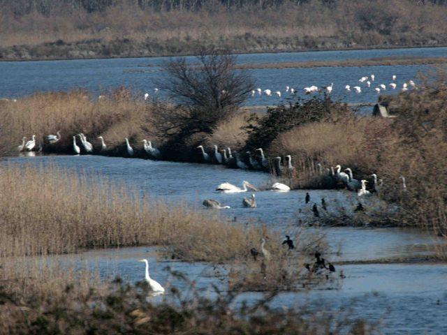 Pumpa Đerane puštena u rad: Svježa morska voda važna za opstanak ptica