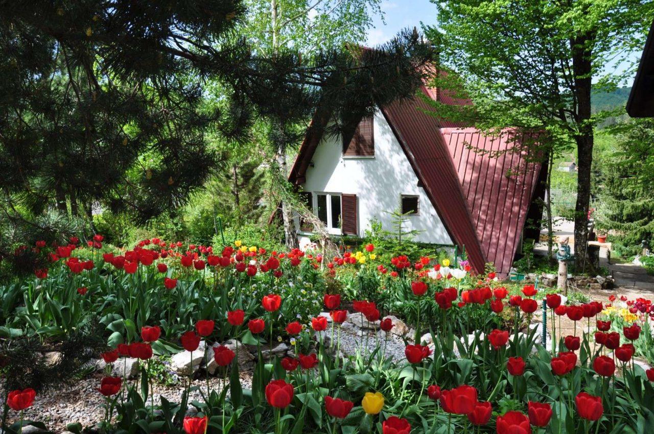 Zavirite u botanički raj pokraj Kolašina