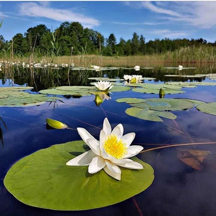 U četvrtak besplatan ulaz u NP Skadarsko jezero!