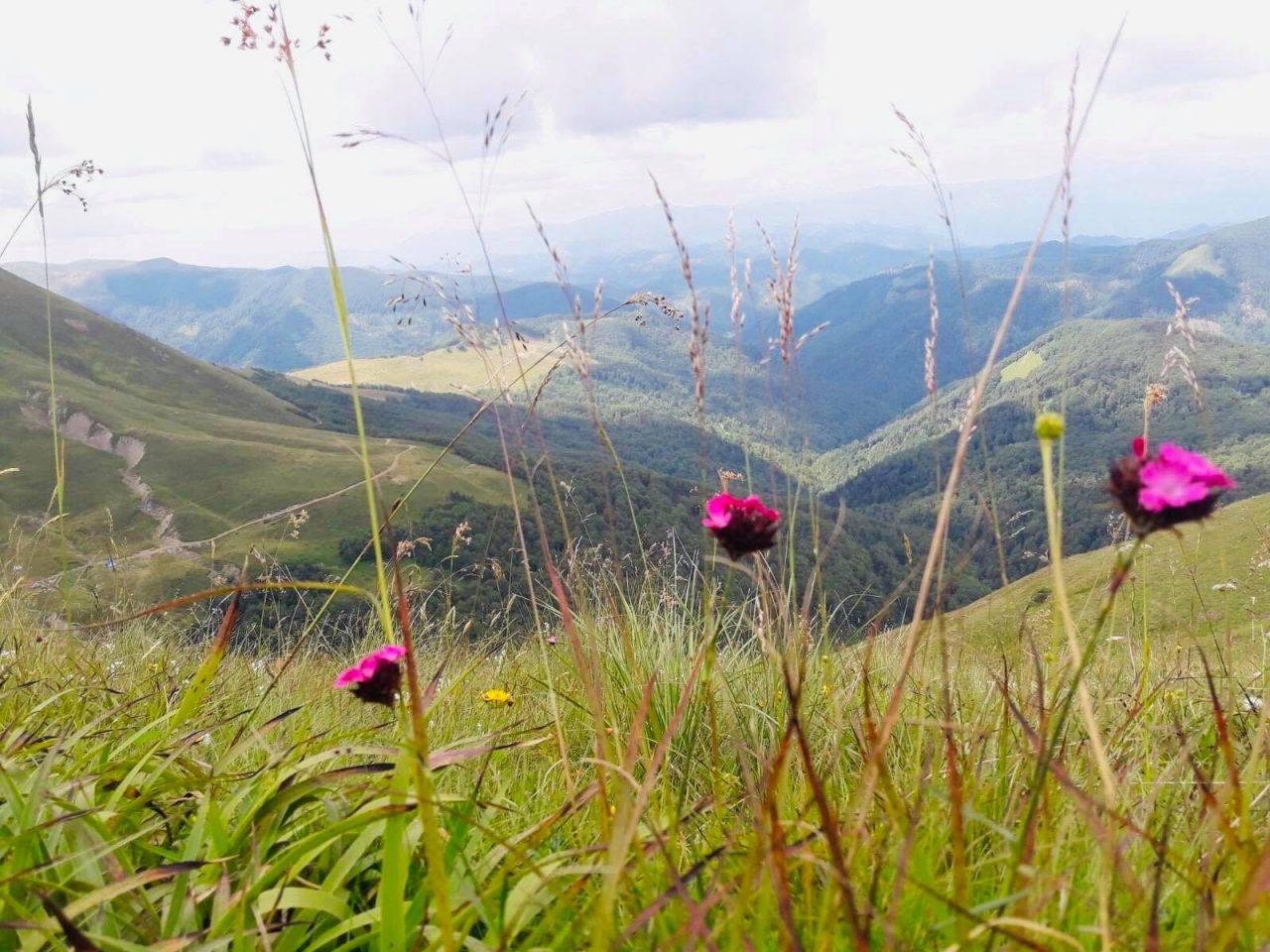 Komovi – planinski vrhovi koji liječe!