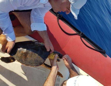 Pogledajte video spašavanja morske kornjače kod Platamuna