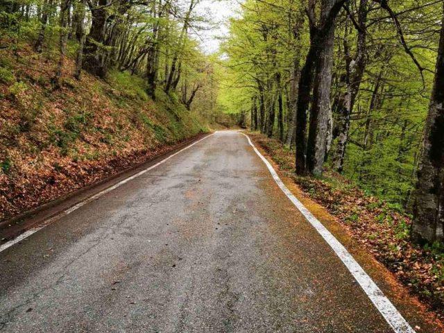 NP Biogradska gora zatvoren za posjetioce
