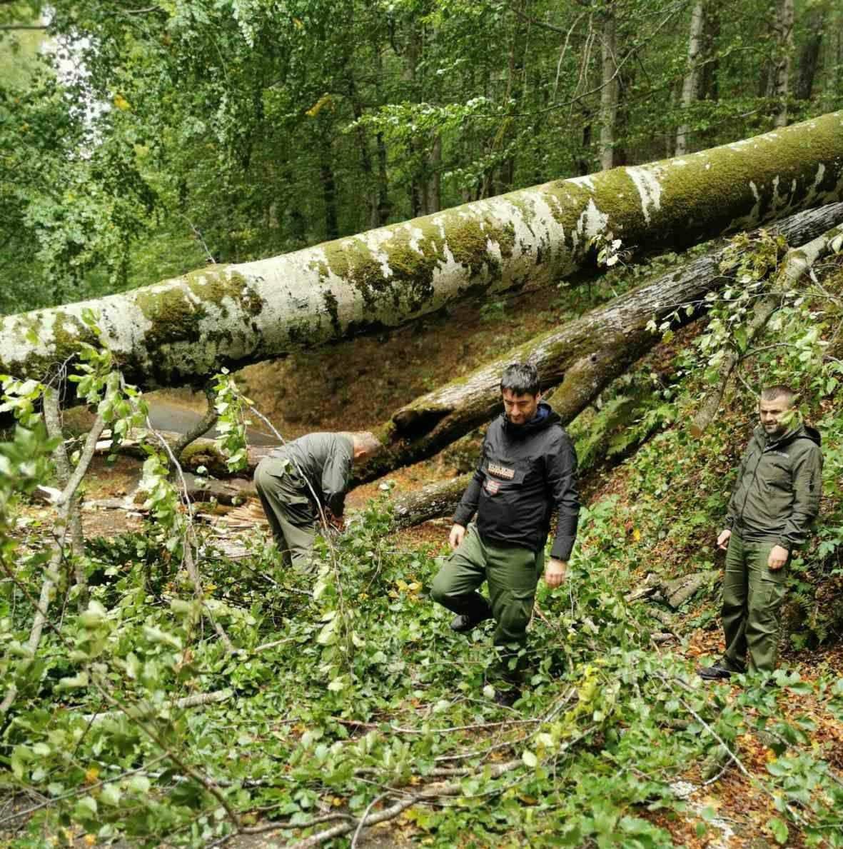 NP Biogradska gora zatvoren za posjete zbog oborenih stabala