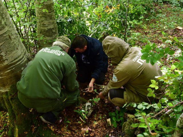 Medvjed Borko uhvaćen i označen u Parku prirode Piva