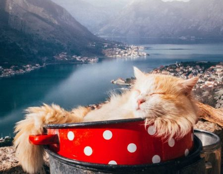 A story about the cats of Kotor