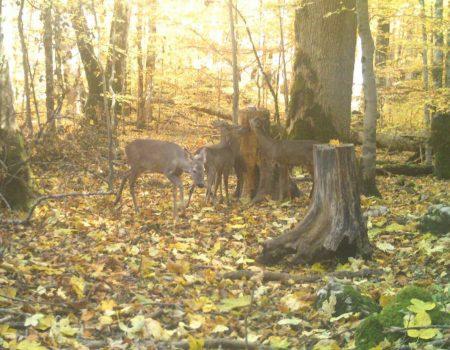 Čudesna jesen u Biogradskoj gori, snimljena i srna