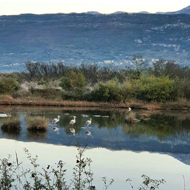 Posjeti Tivatska solila i uslikaj najbolju fotografiju