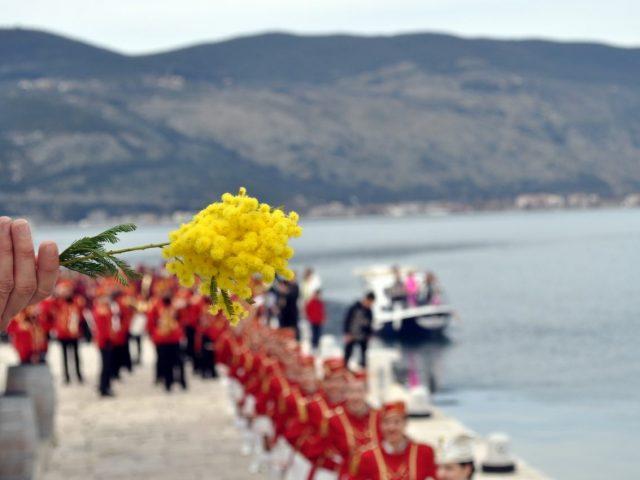 Veza koja traje: Praznik mimoze od 15. februara do 15. marta