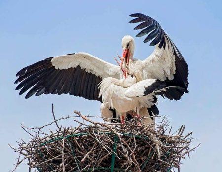 Da li se ptice češće odlučuju za brak ili razvod?