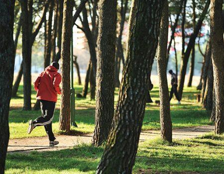 Telemach donacija: Park šuma Tološi dobiće 500 novih sadnica