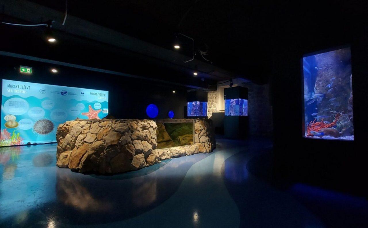 Prvi akvarijum u Crnoj Gori otvoren za posjetioce