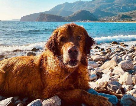 Ove plaže su pet friendly u Crnoj Gori