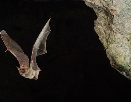 Neka krila su magična: Evropska noć slijepih miševa na Vranjini