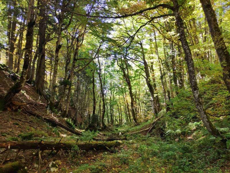 Mališani učili o zaštićenim vrstama na Durmitoru i Biogradskoj gori